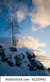 A deciduous tree stands atop a rocky outcropping near Evenes, Norway