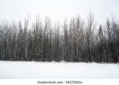 Deciduous Tree in the Winter - No Leaves Standing in the Snow  - Minnesota