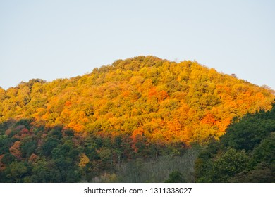 Deciduous trees changing colour in fall along the Blue Ridge Parkway, Virginia, USA