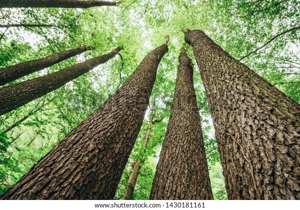 deciduous-trees-green-leaves-below-600w-