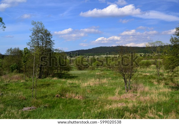Deciduous trees and shrubs in the wild