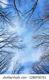 Deciduous trees treetops without leaves over blue sky at sunny winter day