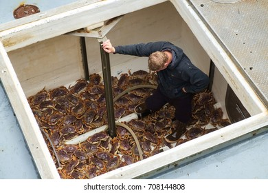 Deck hand descends into hold on crab boat to assist in off-loading of live crab at Westport, Washington
