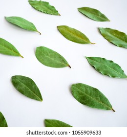 decomposed green leavers on white background