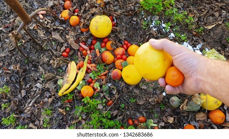 Decomposition - An Adult Male Hand Tossing Discarded Citrus Into A Colorful Compost Pile.