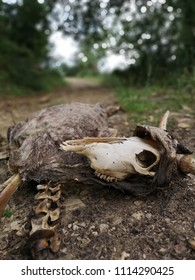 Decomposition of a cow