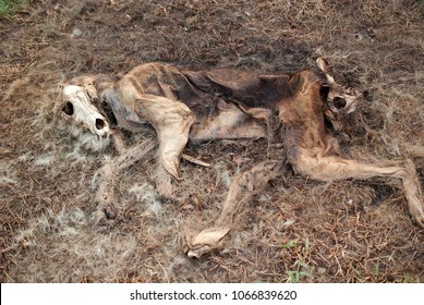 Decomposition of domestic dog at forest