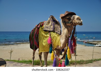 the decorated camel at the sea