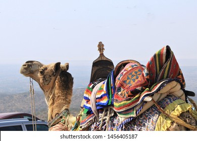 A decorated camel used in Runn of Kutch
