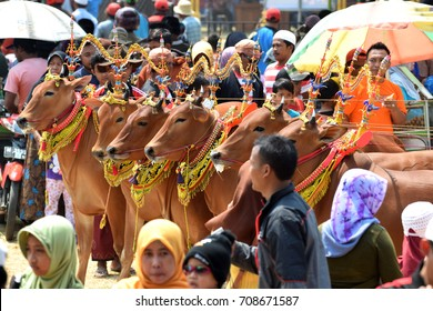 Decorated cows contest before the final of the Cow Race, held every year on the island of Madura in the Stadium of Pamekasan, Indonesia on November 25, 2015