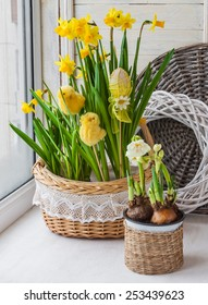 Decorated Easter chickens and eggs blooming daffodils in pots on the balcony