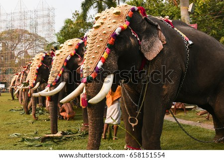 Decorated Elephants Gold Plated Caparisons Standing Stock Photo