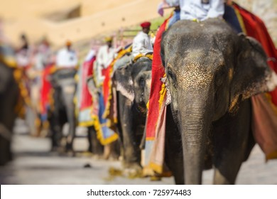 Decorated elephants in Jaleb Chowk in Amber Fort in Jaipur, India. Elephant rides are popular tourist attraction in Amber Fort.