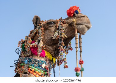 Decorated head of a camel in desert Thar during Pushkar Camel Fair, Pushkar Camel Mela in Rajasthan, India. Close up