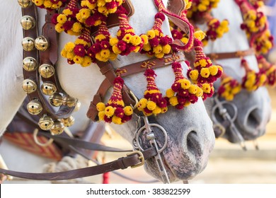 decorated horses for celebration