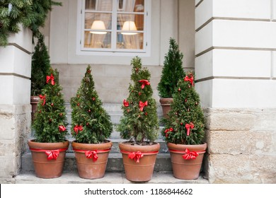 Decorated with red bows and balls Christmas trees in pots near house