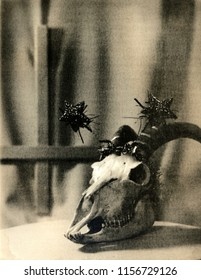 The decorated skull of a goat on the background of an inverted cross. Attention! The image contains granularity and other artifacts of analog photography!