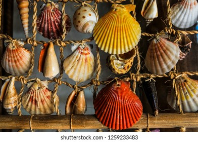 Decorating Shells hanging in lefkada on fishing net greece summer background