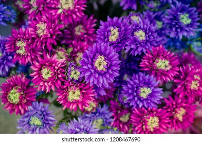 decoration from astra blue and pink flowers in the cemetery at All Saints Day in autumn time