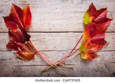 decoration with autumn colored leaves on a wooden background