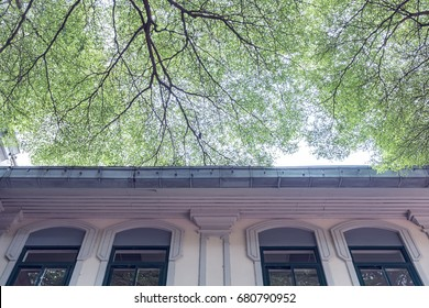 decoration detail of vintage house with branches of tree, worm's eye view photography, filter effect