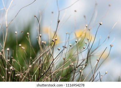 decoration with dried flowers and yellow irises in the background