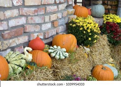 decoration in a garden with pumpkin