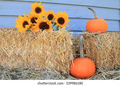 Decoration for Harvest and Thanksgiving from Bales of Hay, Bouquet Sunflowers and Orange Pumpkins with long stem in front of gray wooden wall