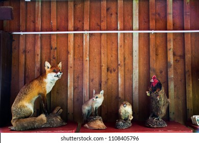 Decoration interior animal taxidermy or stuffed for show and sale at souvenir gift shop in Germany