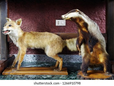 Decoration interior animal taxidermy or stuffed for show