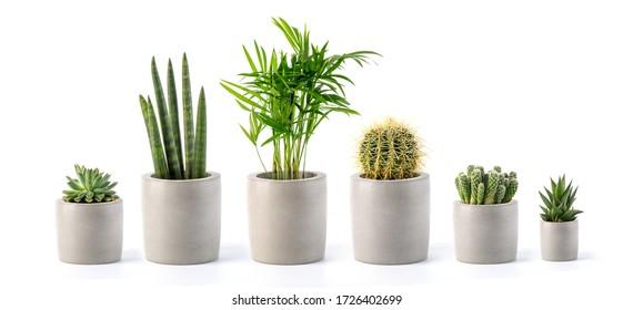 Decoration plant on concrete pot isolated on white background