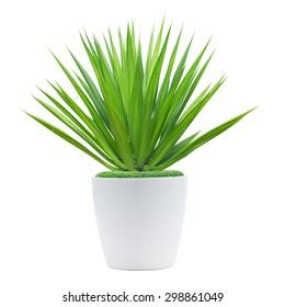 Decoration plant on pot isolated on white