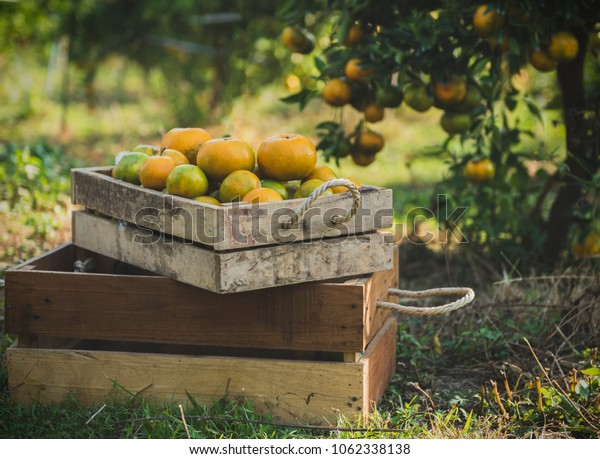 decoration of wooden box and orange fruits and orange garden space