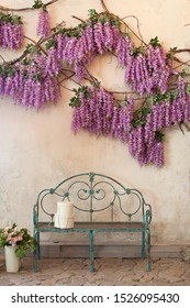 decorations bench under the purple wisteria tree. Blooming wisteria plants on a background of a house wall with a bench. Blooming wisteria in the park by the garden bench. wisteria blossoms in Spring