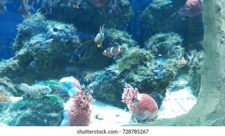 decorative aquarium with fish and coral