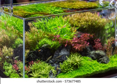 decorative aquarium with plant from clear glass