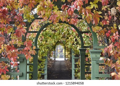 Decorative Archway with Beautiful Autumn Colours - Tallinn, Estonia