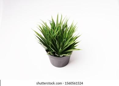 Decorative artificial plants on black pot - green grass - Shutterstock ID 1560561524