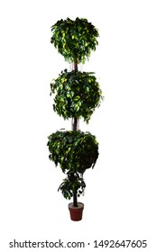 decorative artificial trees with white background. selective focus. isolated