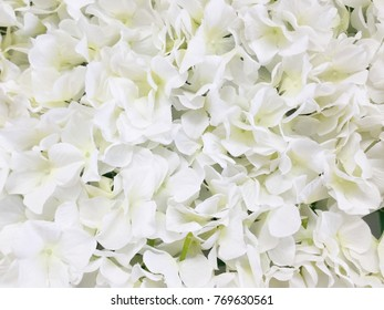 Decorative artificial white flowers background