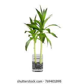 Decorative bamboo plant planted glass pot isolated on white background. 3D Rendering, Illustration.