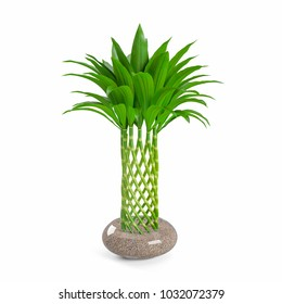 Decorative bamboo plant planted transparent glass pot isolated on white background. 3D Rendering, Illustration.