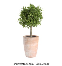 Decorative Bay Laurel tree isolated on white background. 3D Rendering, Illustration.