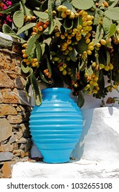 Decorative blue amphora with prickly pears in the background, Kastro traditional village, Sifnos island, Greece.
