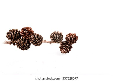Decorative brown twig with cone isolated on a white background