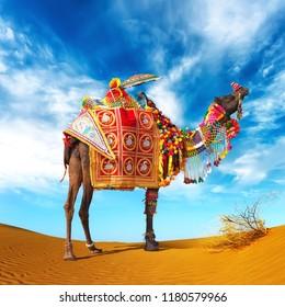 Decorative Camel from Oman Desert