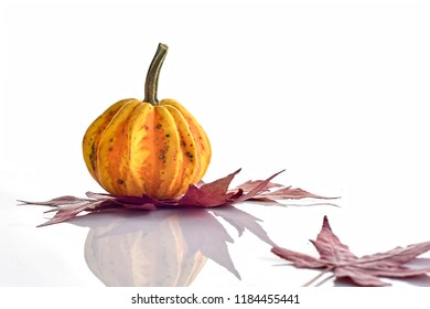 Decorative Colorful Mini Pumpkin, gourds and red fall leaves