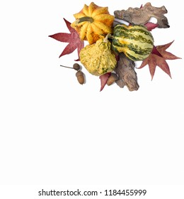 Decorative Colorful Mini Pumpkins, gourds and red fall leaves