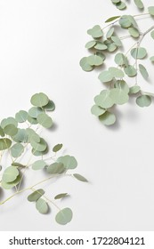 Decorative corner frame from evergreen fresh natural branches of Eucalyptus plant on a light grey background, copy space. Greeting card.