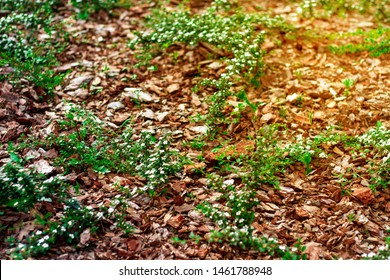 Decorative decoration flower beds natural pine bark. Ideas for flowerbed design. Flowerbed Mulching in sunset rays with natural brown pine bark mulch. The use of natural materials in the design.